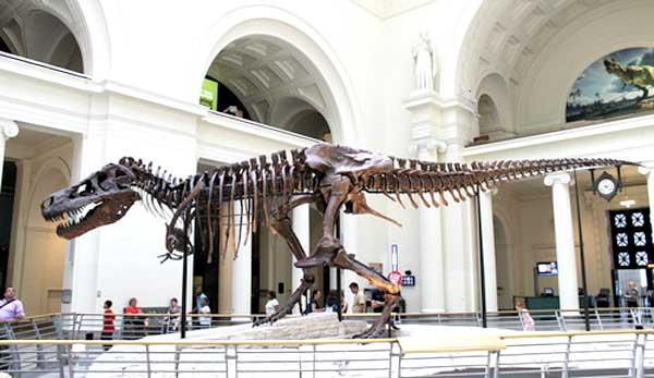 Dinosaur13_sue-pic4