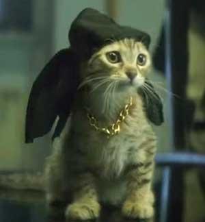 Keanu_cat